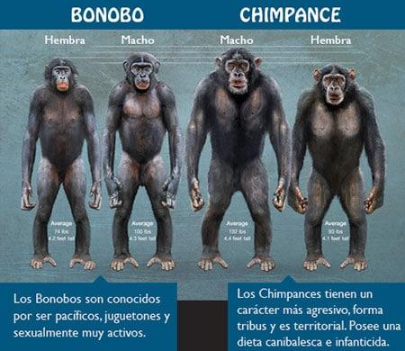 mono bonobo